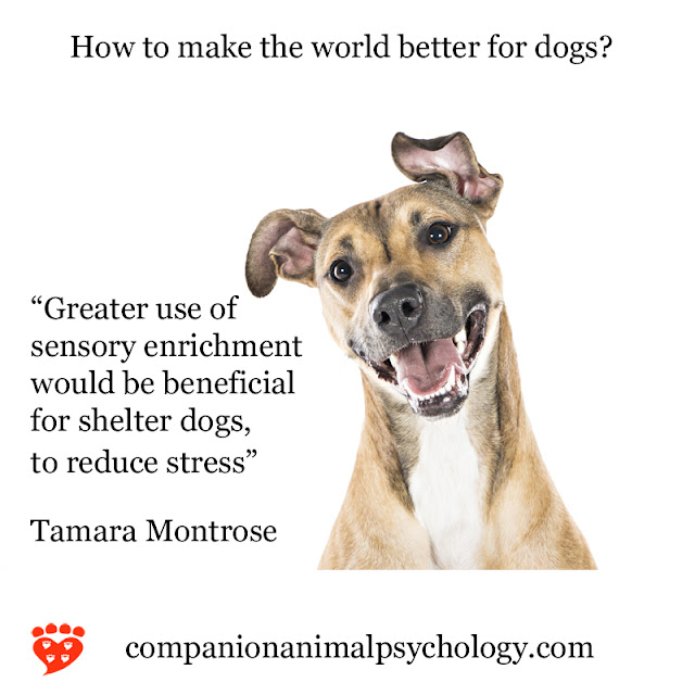 Sensory enrichment reduces stress for dogs like this happy mixed breed. Part of the better world series about dogs and cats