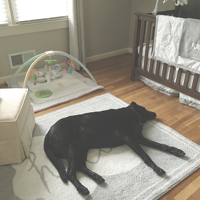the girlish blog, girlish, amanda sumner, mom blog, family blog, adjusting dog to new baby