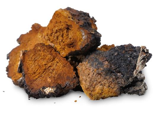 Tác dụng của Melanin trong nấm Chaga