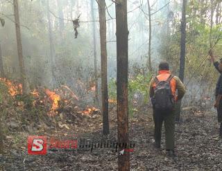 2.5 Hektar Lahan Hutan Di Ngasem Terbakar