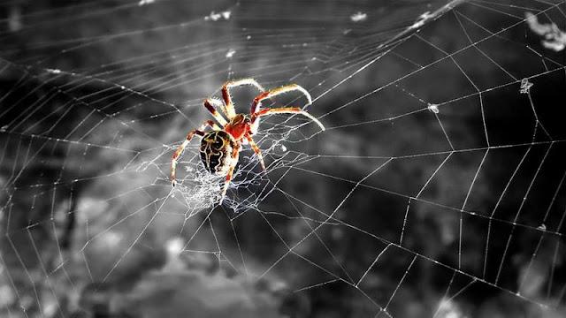 تفسير رؤيه العنكبوت في المنام