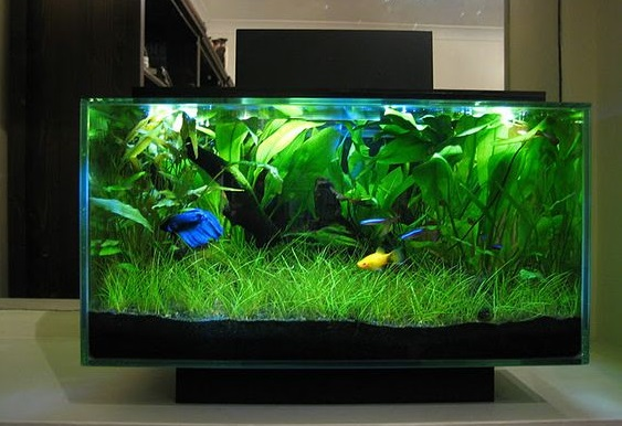 Aquascape Mini Unik