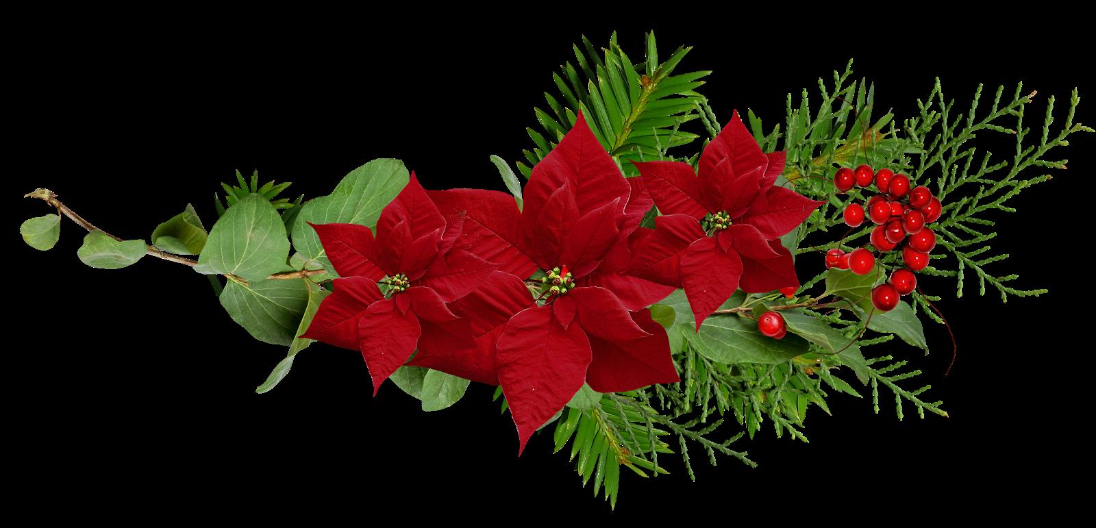 Cosas Para Photoscape Flores Y Plantas Arboles Ps: ® Blog Católico Navideño ®: 01/22/15