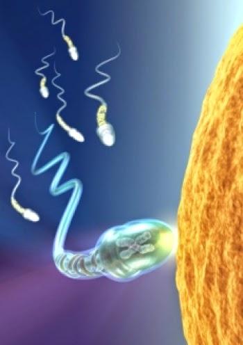 menghindari ketidaksuburan - infertilitas