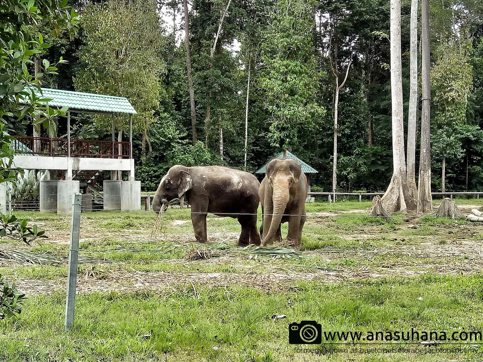 Tempat Menarik di Pahang : Pusat Konservasi Gajah Kebangsaan Kuala Gandah