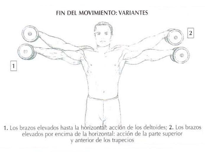 Variantes en el final del movimiento de las elevaciones laterales con mancuernas | Rane Forti