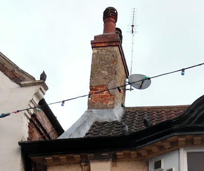 Pigeons on the roof of a building in Brigg town centre - see Nigel Fisher's Brigg Blog, January 2019