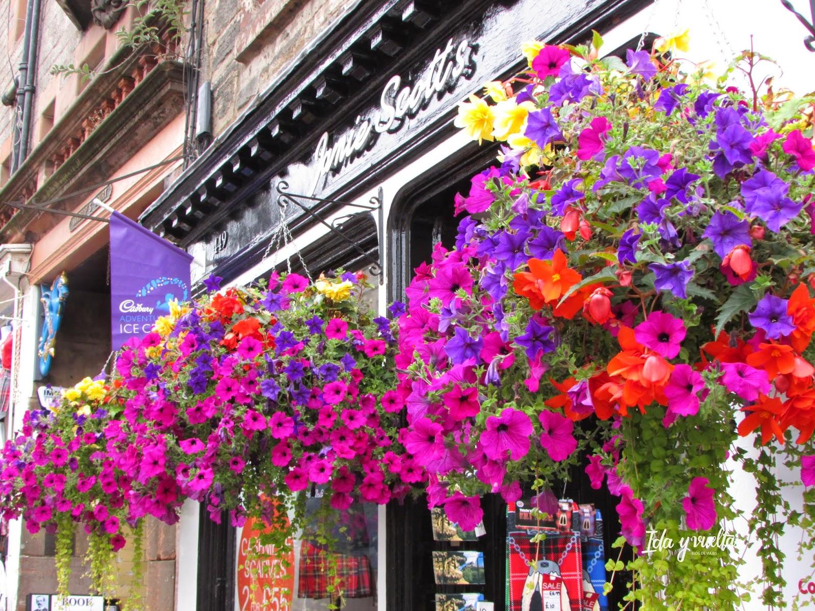Flores adornando