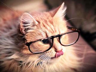 Gambar Kucing Lucu Menggemaskan Pakai Kacamata