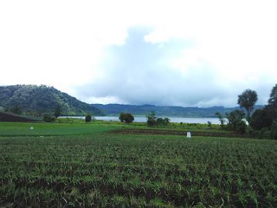 Salah satu Lahan Pertanian di Kecamatan Modayag