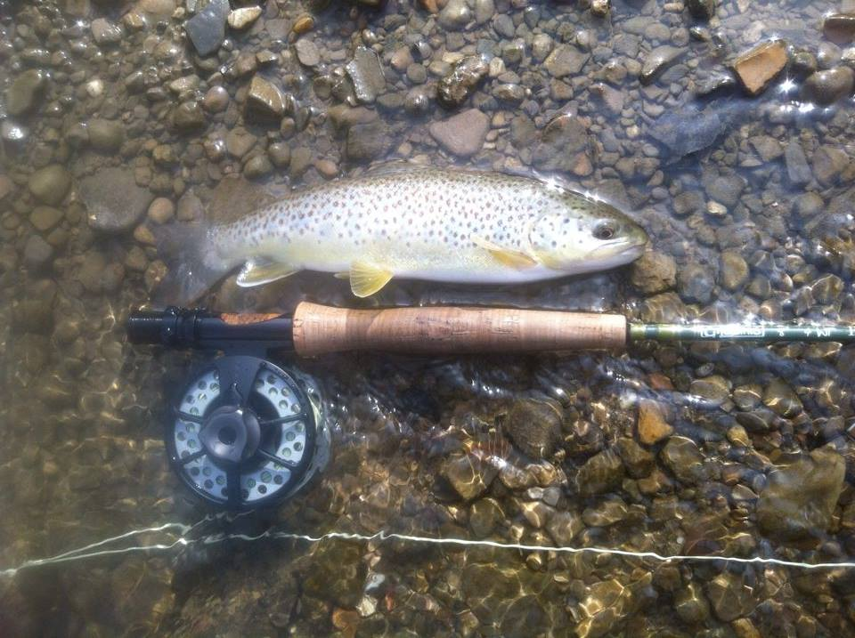 Mad river outfitters fishing reports 3 23 16 for Clear creek fishing report
