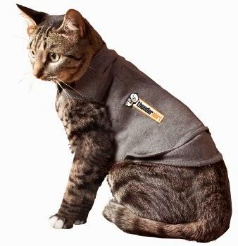 Лечебный жилет для кошки
