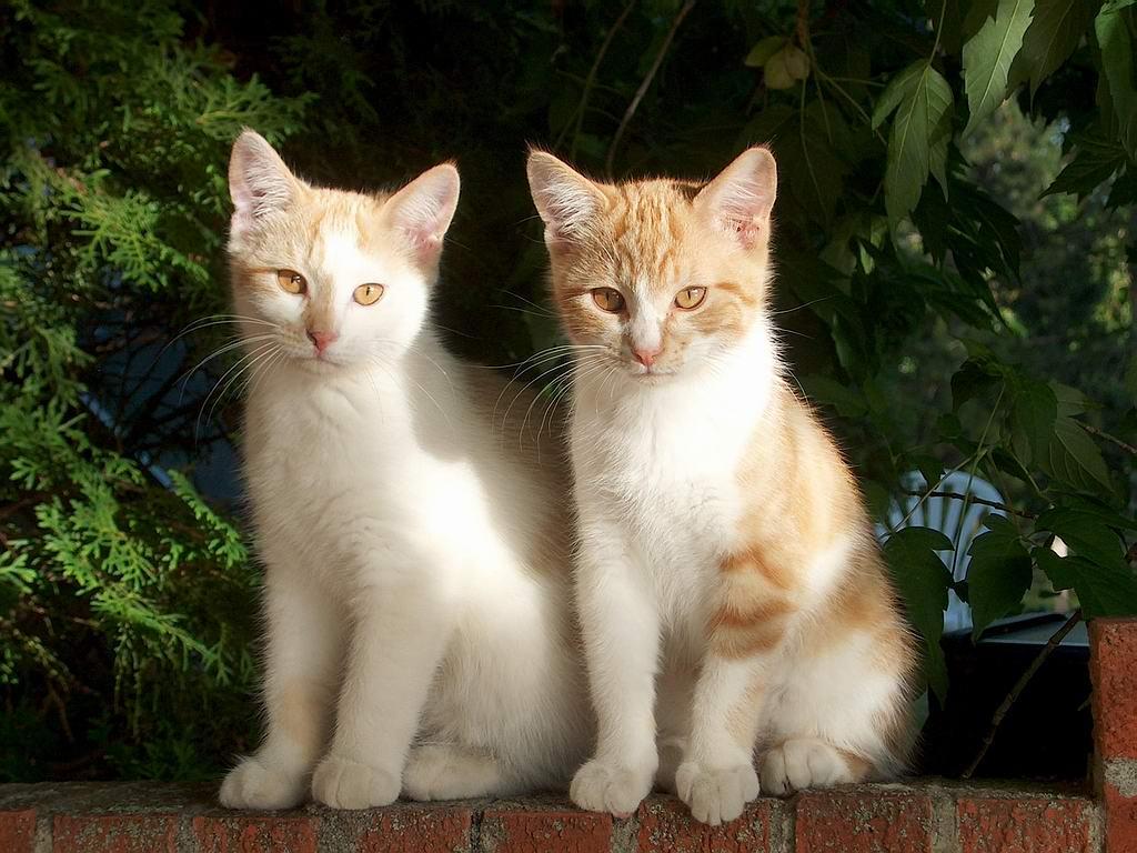 Beautiful Naughty Cats Wallpapers