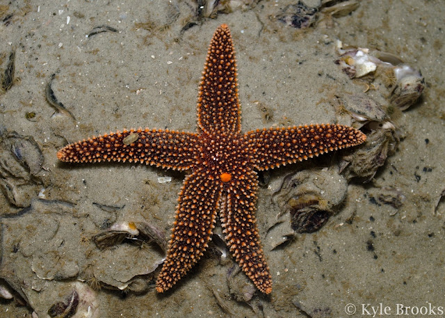 Forbes Sea Star