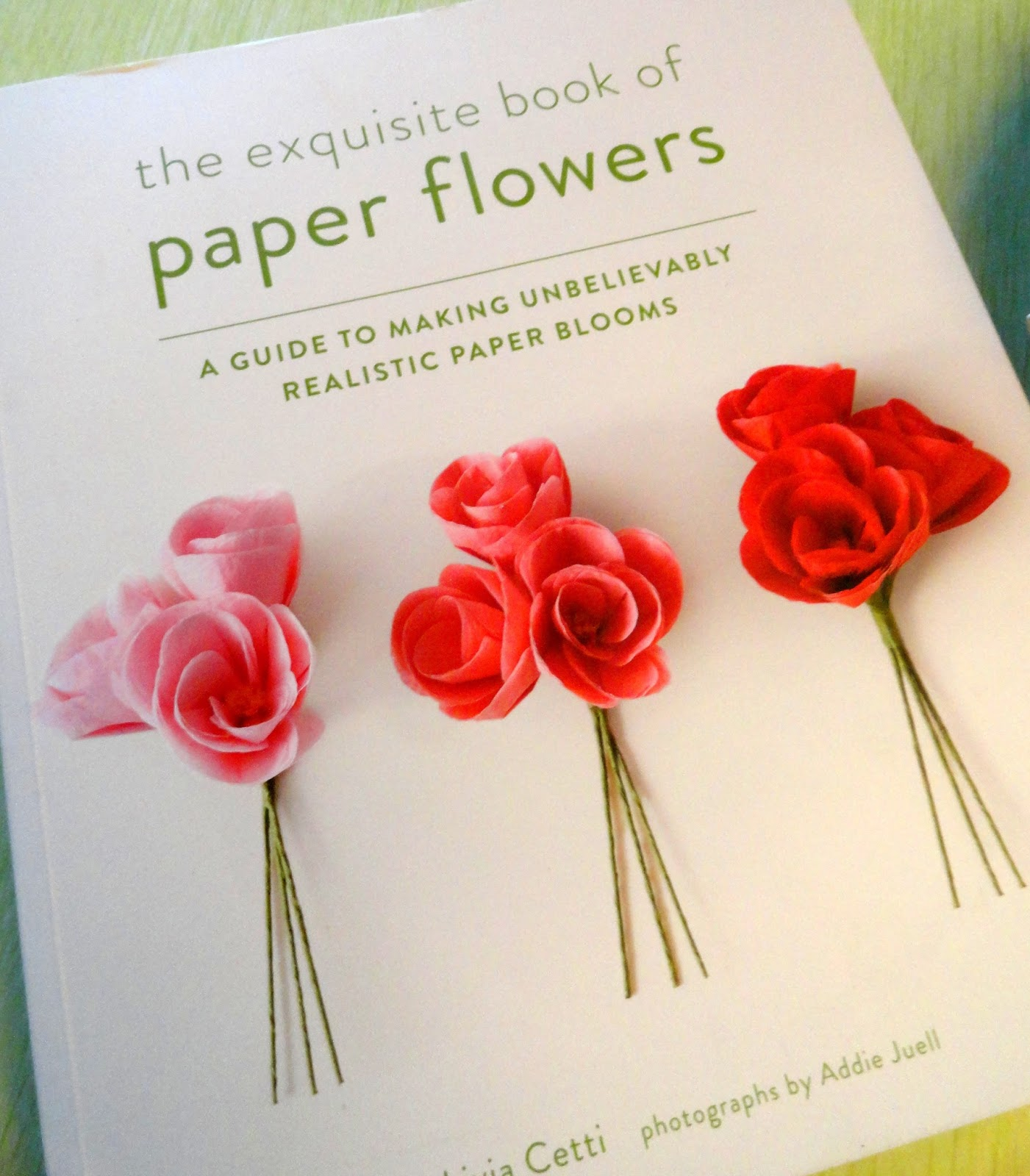 Danger Garden Paper Botanical Creations Lead To