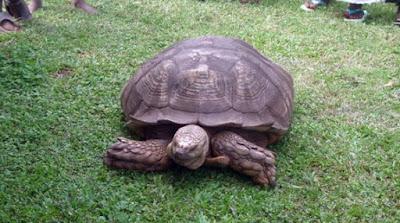 alagba tortoise ogbomoso oyo state