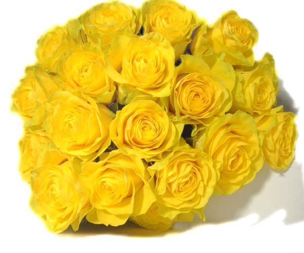 Yellow Rose flowers flowers