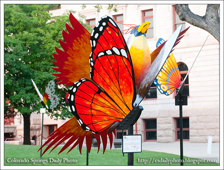 Here Are A Few Of The Wonderful Butterflies On Display. Make Sure To Get  Down To The Pioneers Museum To See These In Person!