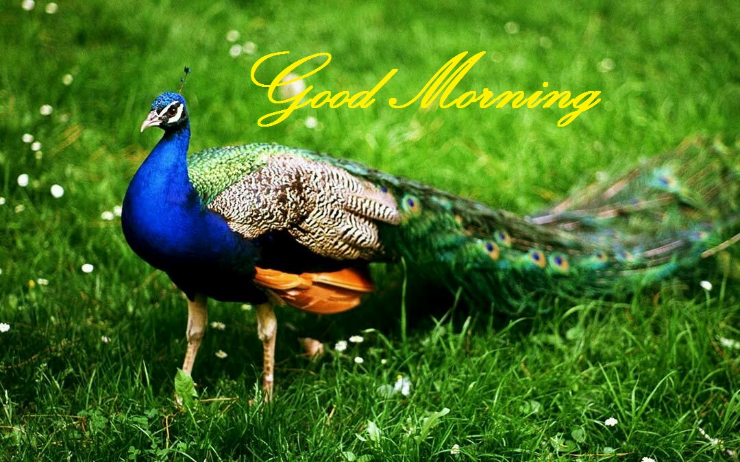 100 Hd Good Morning Lovely Wishes Wallpapersimageswishesdesigns