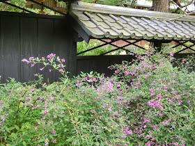 東慶寺のハギ