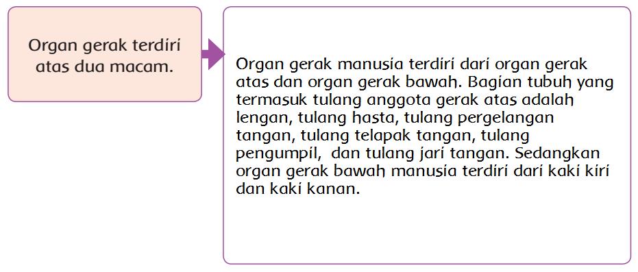 88 Koleksi Gambar Organ Gerak Hewan Kelinci Terbaru