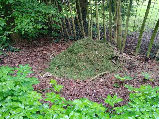 Fresh grass cuttings in the woods adjoining Gobions Open Space, May 2018 Image by North Mymms News released under Creative Commons BY-NC-SA 4.0