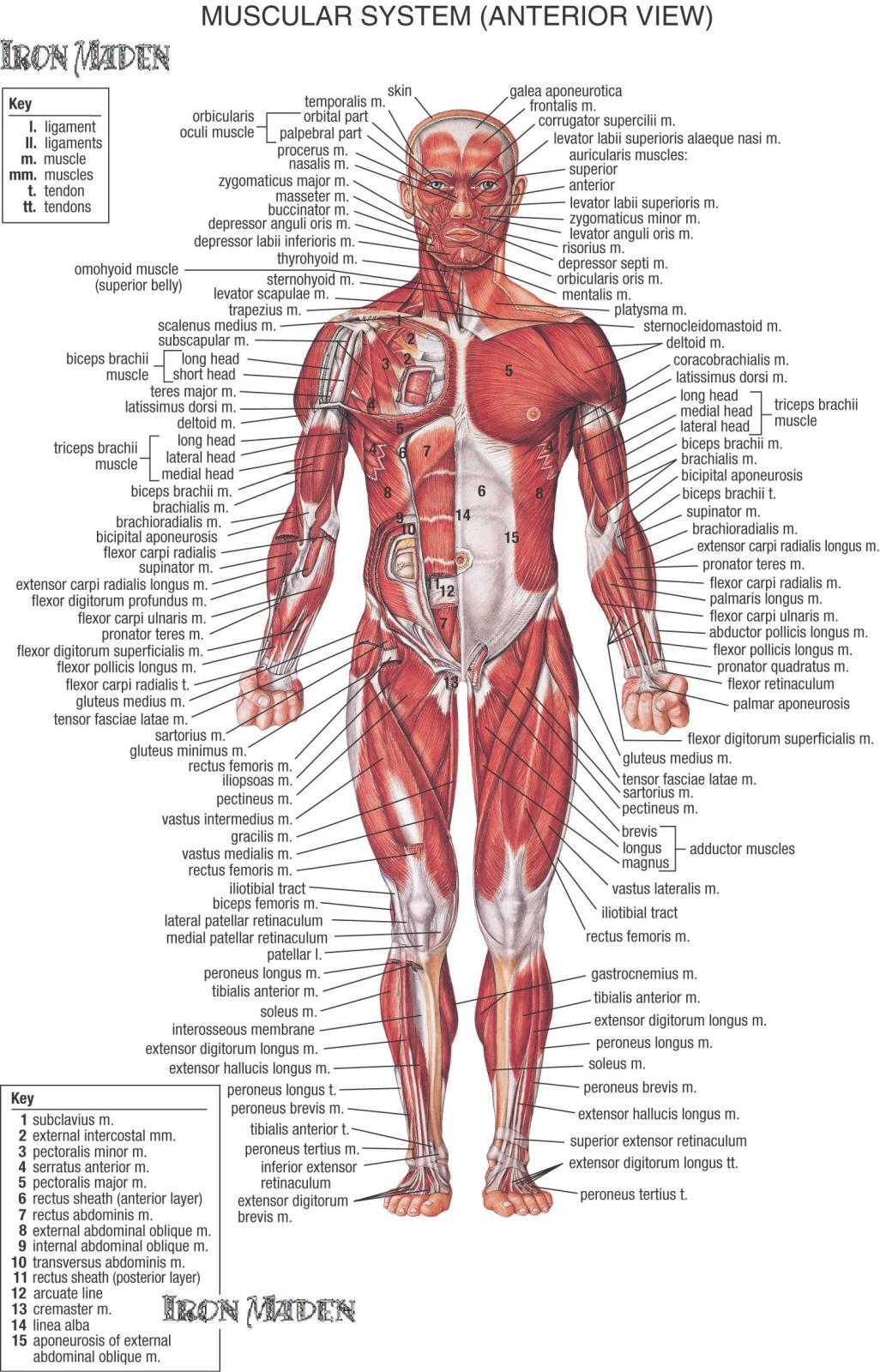 Hasil gambar untuk gambar sel-sel saraf tubuh manusia