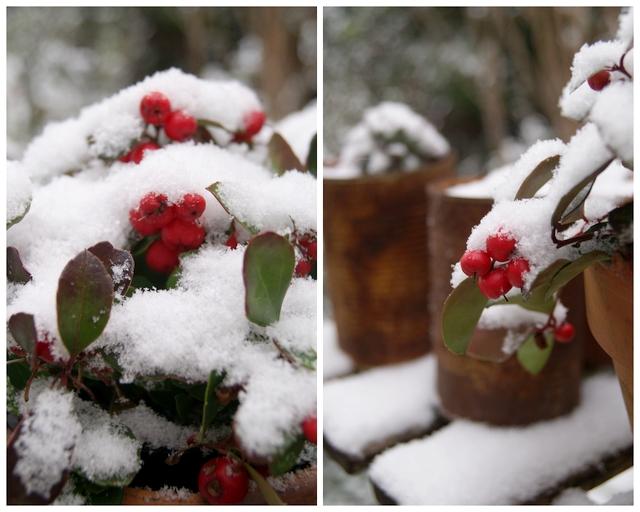 Weihnachtlicher Gartenschmuck Gaultheria
