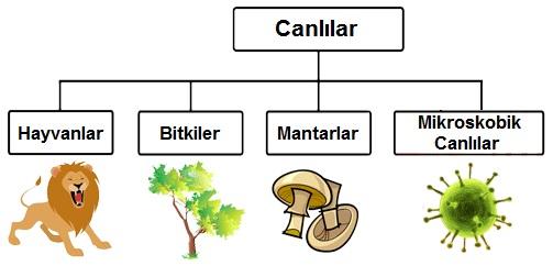 Canlılar Hangi Özelliklerine Göre Sınıflandırılır - fenbilim.net