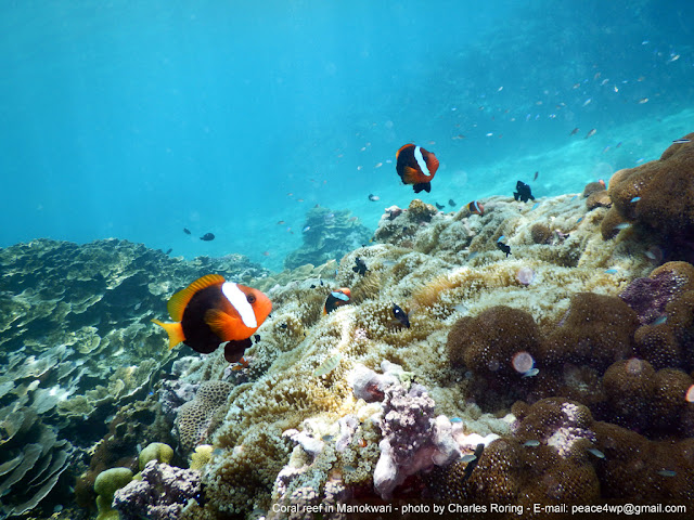 snorkeling picture from bakaro beach