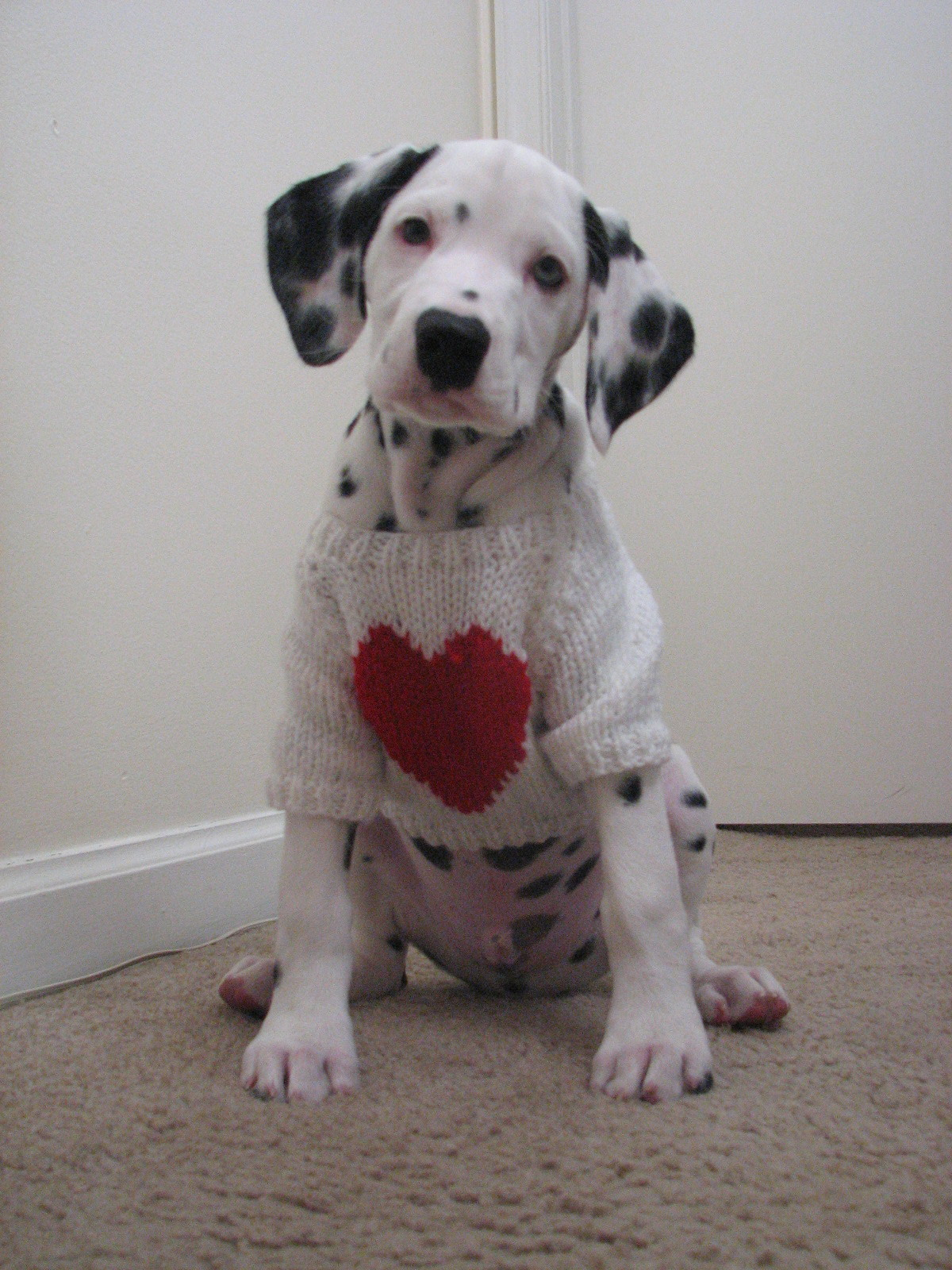 Saved by dogs valentine 39 s day and the one you love - Valentines day pictures with puppies ...