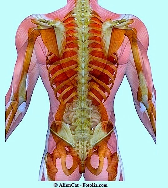 Sintomi e terapia mal di schiena - Mal di schiena letto ...