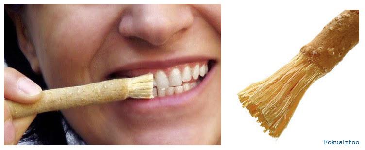 15 Cara Untuk Memutihkan Gigi Secara Alami Fokusinfo