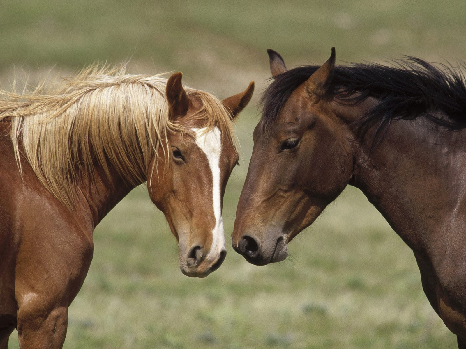 Horse Wallpapers Pictures of Horse   Animal Photo Pictures Of Horses