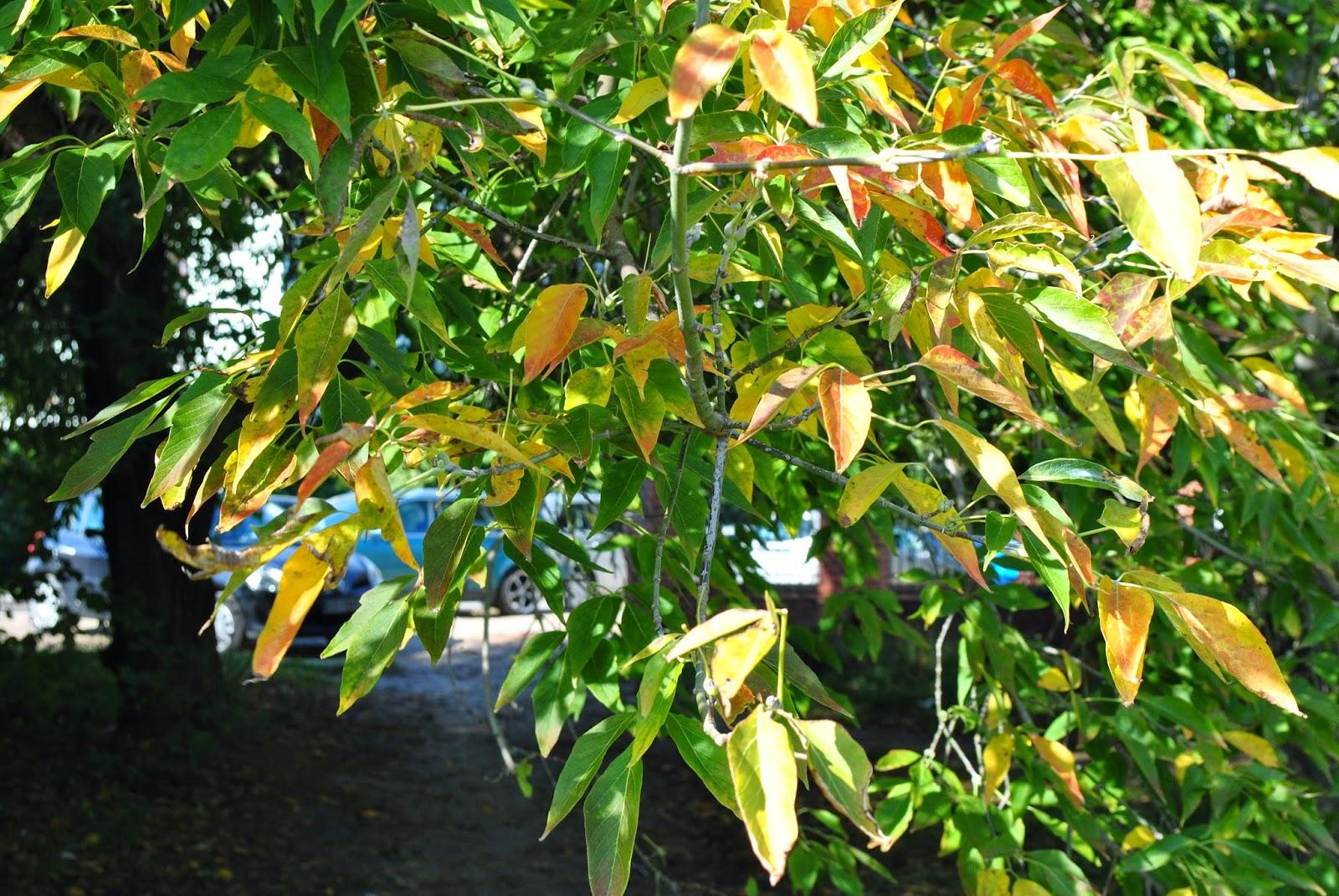 jesień_pięknie_jest_żyć