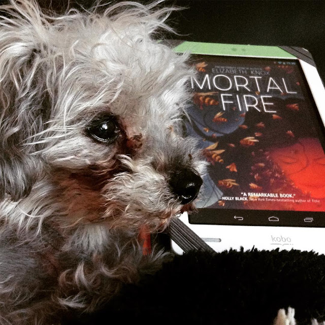 A fuzzy grey poodle, Murchie, lies in profile in front of a white Kobo with the cover of Mortal Fire on it. The cover features a brown girl lit from below so red light bathes her face. Bees swirl through her long, dark hair.