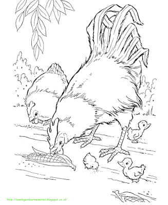 Gambar Mewarnai Ayam - 12