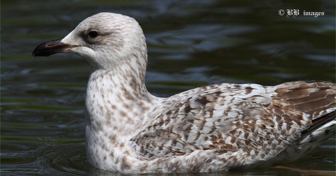 Bill Hubick Photography