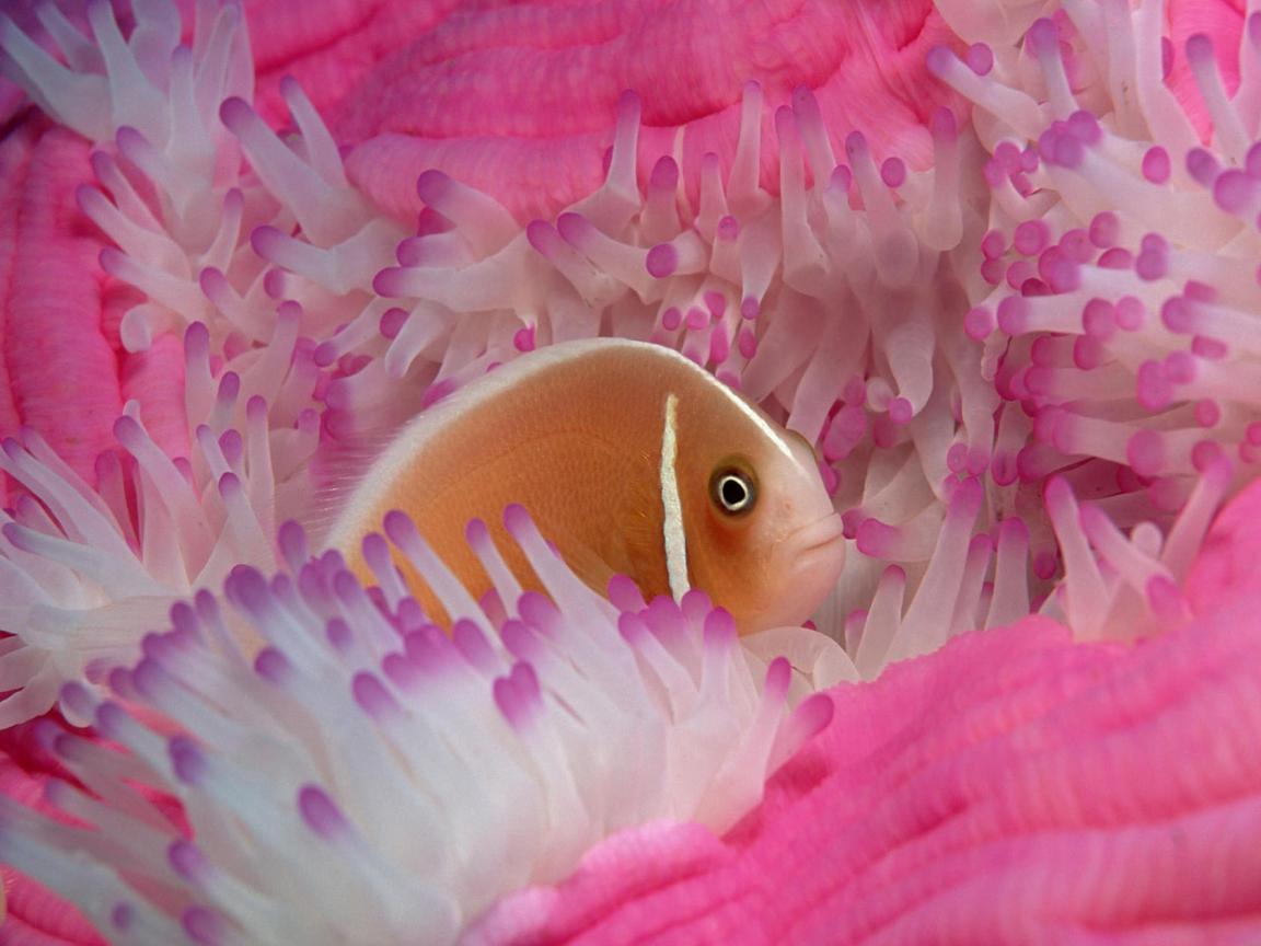 Fish Wallpapers Beautiful Water Hd
