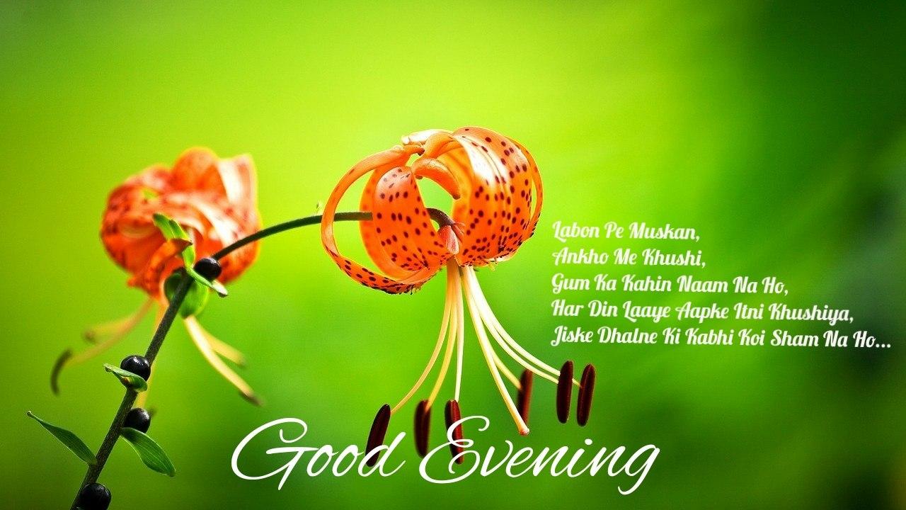 good evening love shayari with lovely flowers