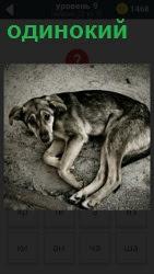 На земле лежит одинокая собака с поднятой мордой и свернувшись клубком с грустным выражением морды