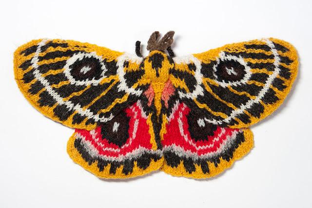 Zaddach's Emperor Moth