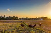 Bisnis usaha pedesaan yang menguntungkan dan sukses