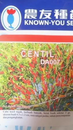 benih petani,tahan virus, buah lebat, Known You Seed, Cabai Centil, tahan layu, tahan cekaman calcium