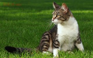 Cara Merawat Kucing Kampung Peliharaan yang Baik dan Benar