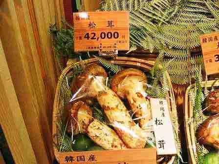 Mattake atau Matsutake Mushrooms adalah jamur dengan harga paling mahal di dunia