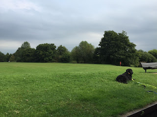 Guide Dog Oakley relaxing in Northcroft Park