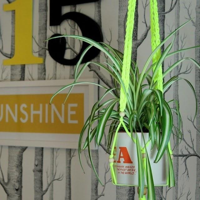 lazy daisy jones boodles plant pot holder