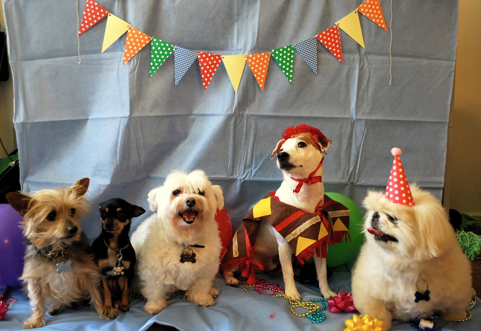 birthday dogs images daydreamer creator diy extraordinaire dog birthday party 4887