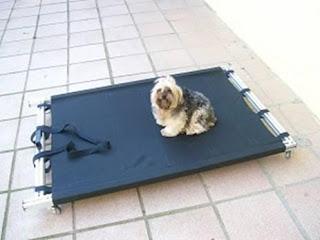 maca para cães gigantes